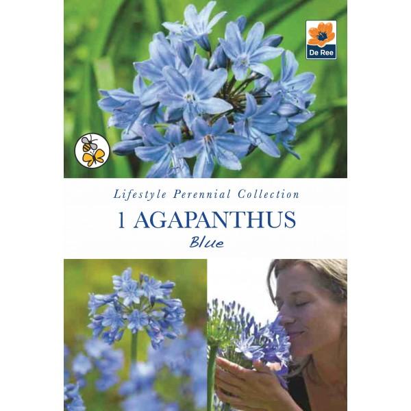 De Ree Agapantha Blue