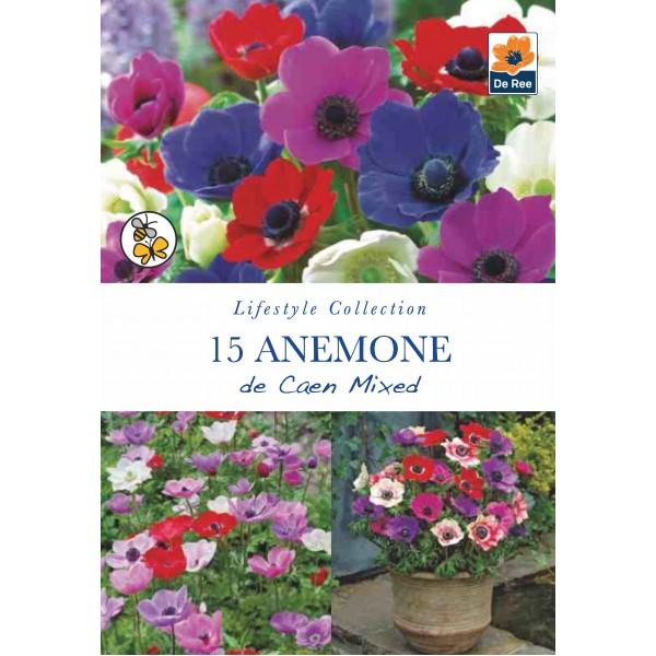 De Ree Anemone de Caen Mixed