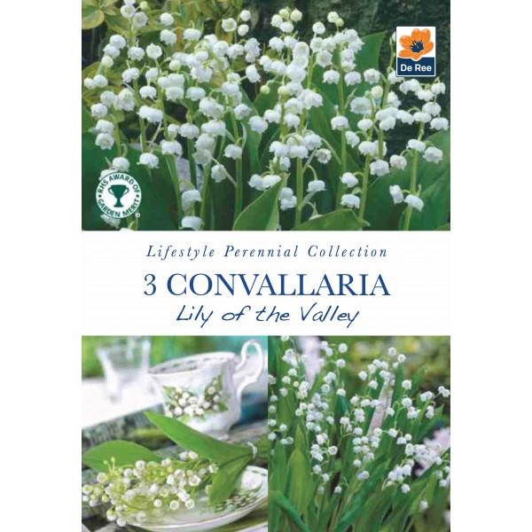 De Ree Convallaria Lilly of the Valley