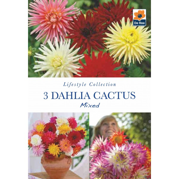 De Ree Dahlia Cactus Mixed