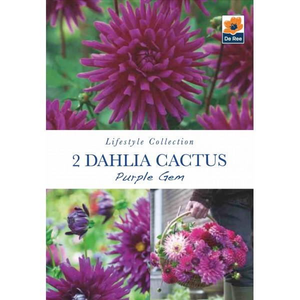 De Ree Dahlia Cactus Purple Gem