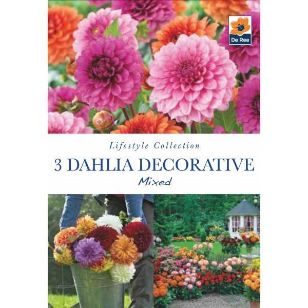 De Ree Dahlia Decorative Mixed