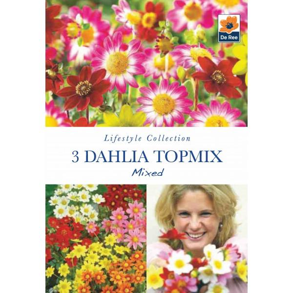 De Ree Dahlia Topmix Mixed
