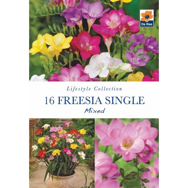 De Ree Freesia Single Mixed