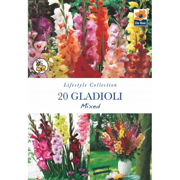 De Ree Gladioli Mixed