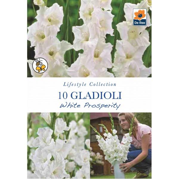 De Ree Gladioli White Prosperity