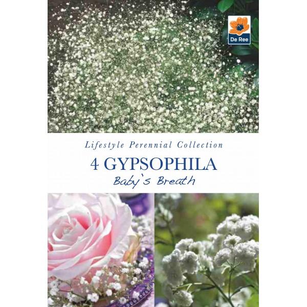 De Ree Gypsophila Baby's Breath