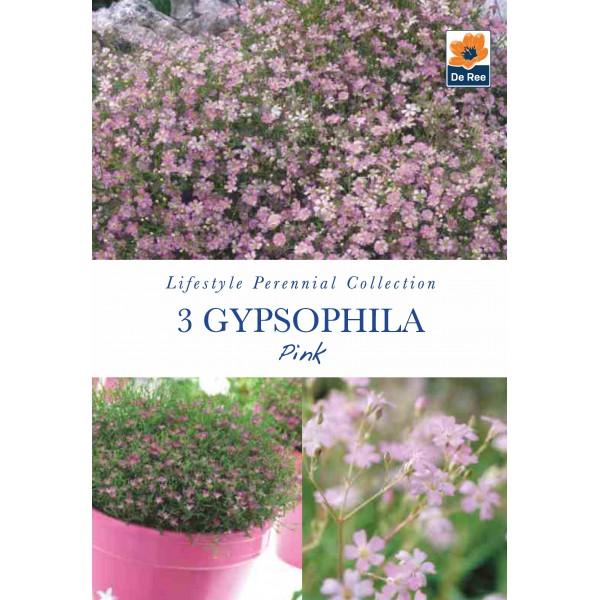 De Ree Gypsophila Pink