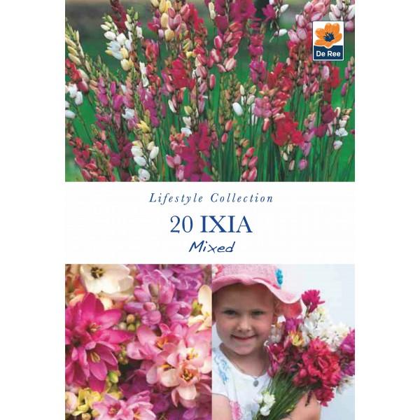 De Ree Ixia Mixed