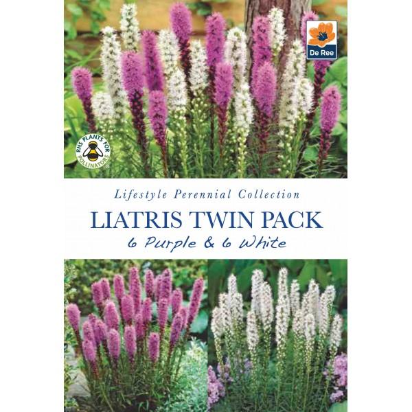 De Ree Liatris Twin Pack Purple & White