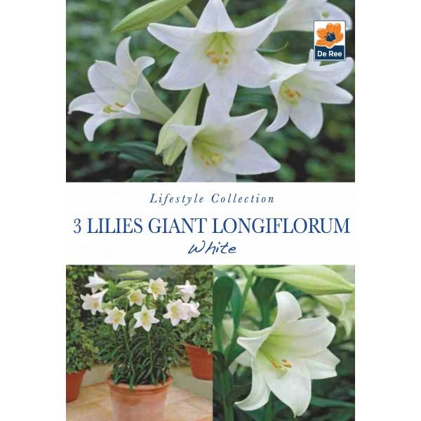 De Ree Lilies Giant Longiflorum White