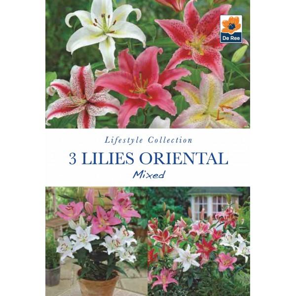 De Ree Lilies Oriental mixed