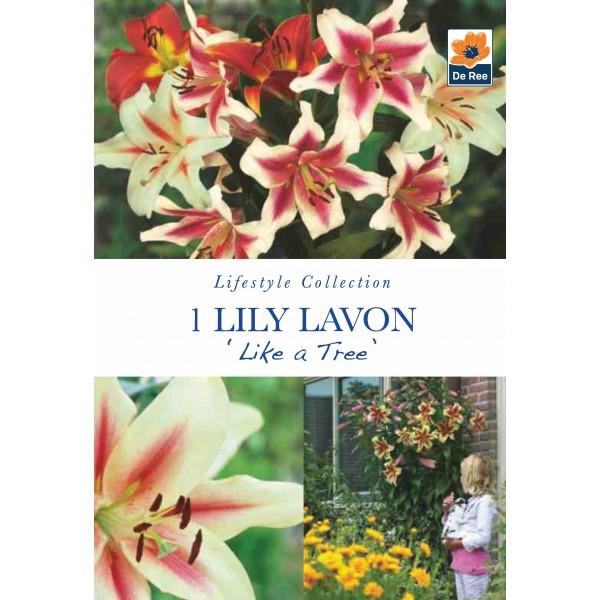 De Ree Lily Like A Tree Lavon