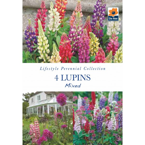 De Ree Lupin Twin Pack - The Pages & Nobel Maiden