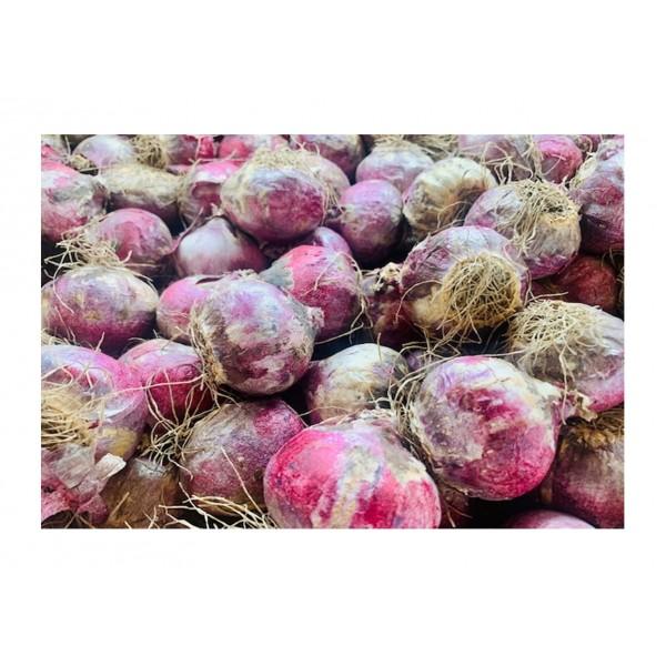 Loose Hyacinth Bulbs - Pink Pearl - x3