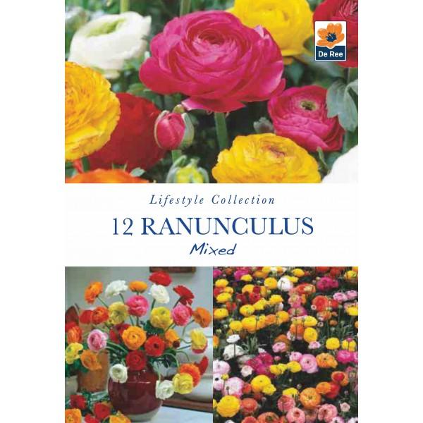 De Ree Ranunculus Mixed