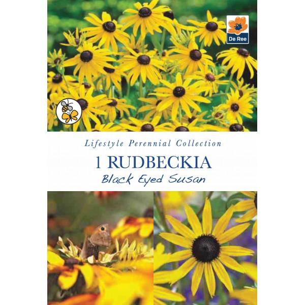 De Ree Rudbeckia Black Eyed Susan