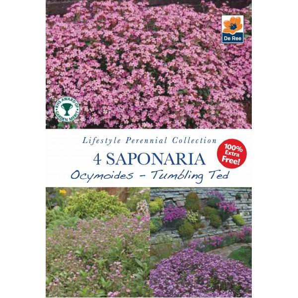 De Ree Saponaria Ocymoides