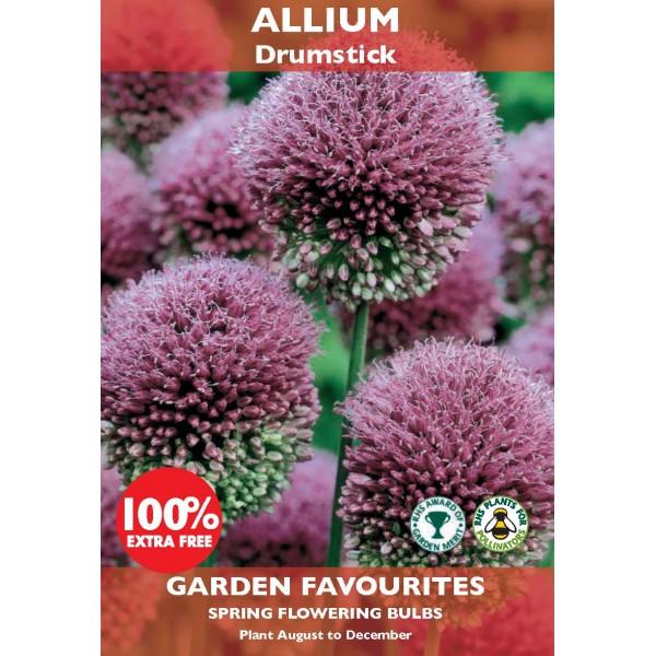 Allium Drumstick - 30 Bulbs (Special Buy 15 get 100% extra Free)