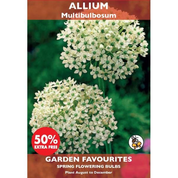Allium Multibulbosum - 3 Bulbs (Special Buy 2 get 50% Extra Free)