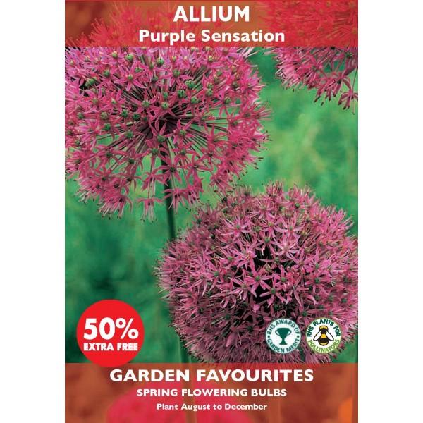 Allium Purple Sensation - 3 Bulbs (Special Buy 2 Get 50% Extra Free)