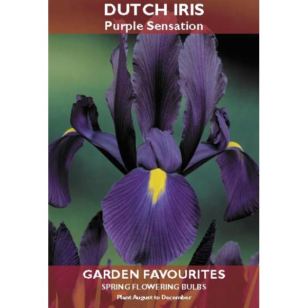 Dutch Iris Purple Sensation - 10 Bulbs per pack