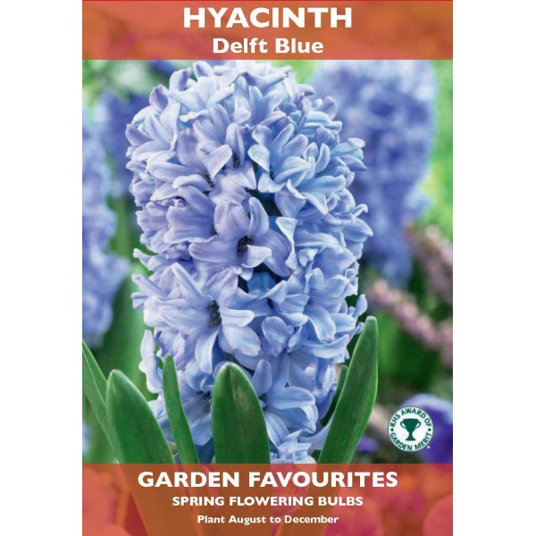 Hyacinth deft Blue - 2 Bulbs per pack
