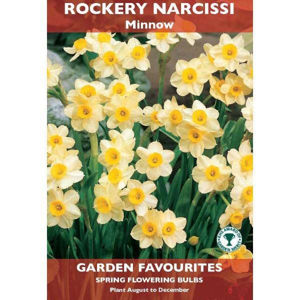Rockery Narcissi Minnow - 6 Bulbs per pack