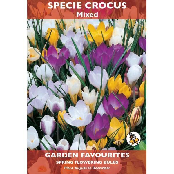 Specie Crocus Mixed - 8 Bulbs per pack