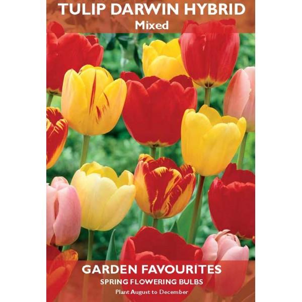 Tulip Darwin Hybrid Mixed  - 6 Bulbs per pack