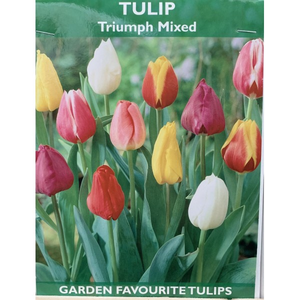 Tulip Triumph Tall Mixed - 5 Bulbs per pack