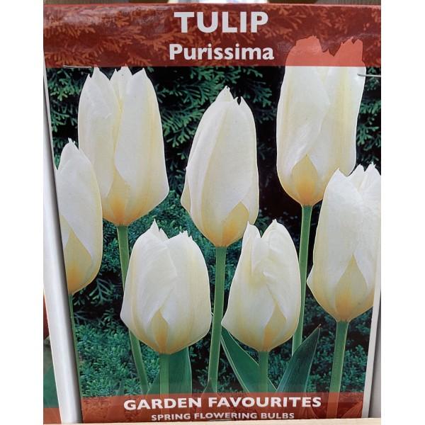Tulip Purissima - 5 Bulbs per pack