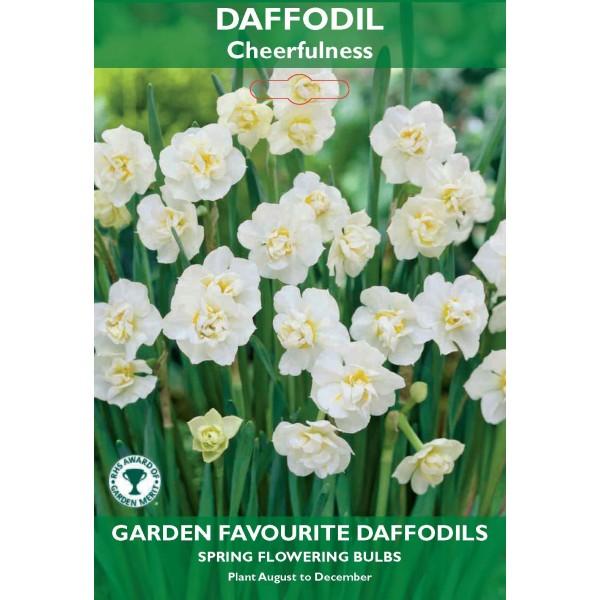 Daffodil Double Cheerfulness - 5 Bulbs per pack
