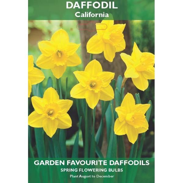 Daffodil Large Flowering California - 6 Bulbs per pack
