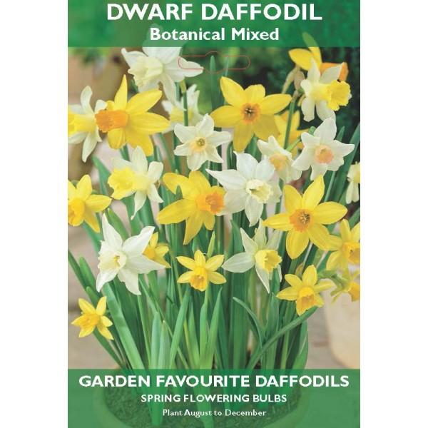 Dwarf Daffodil Botanical Mixed - 6 Bulbs per pack