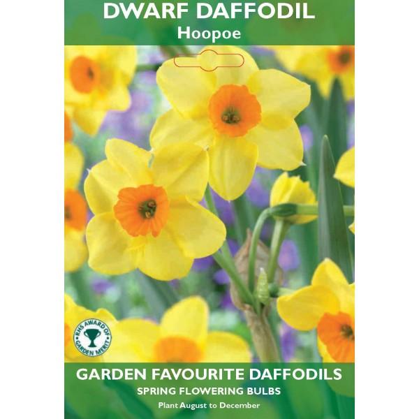 Dwarf Daffodil Hoopoe - 6 Bulbs per pack