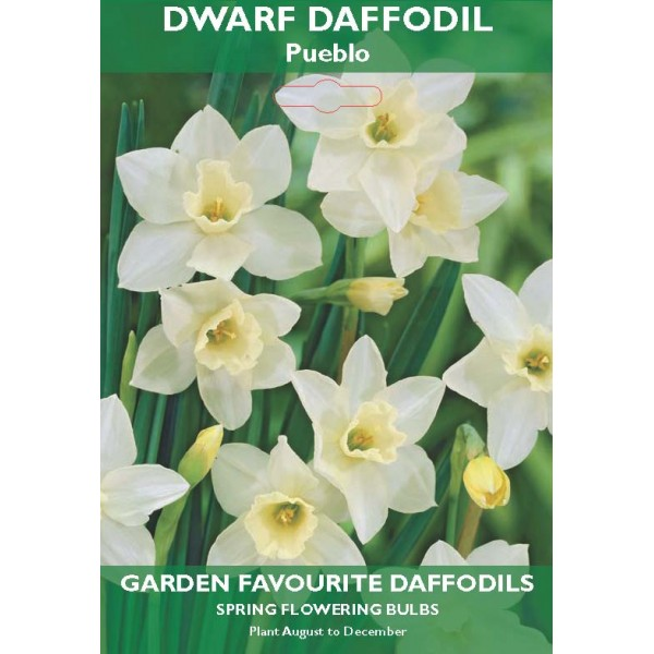 Dwarf Daffodil Pueblo - 6 Bulbs per pack