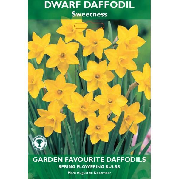 Dwarf Daffodil Sweetness - 8 Bulbs per pack