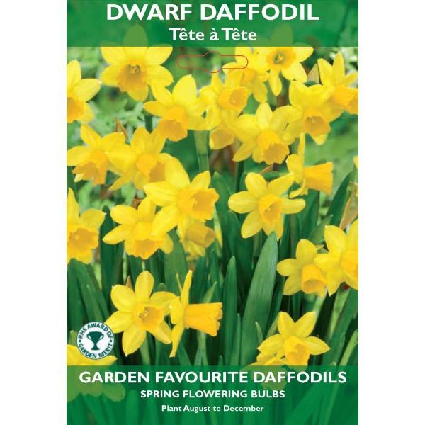 Dwarf Daffodil Tete a Tete - 6 Bulbs per pack