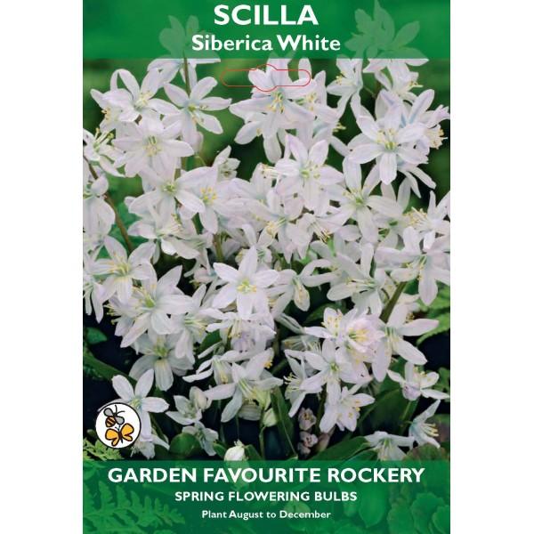Scilla Siberica White - 6 Bulbs per pack