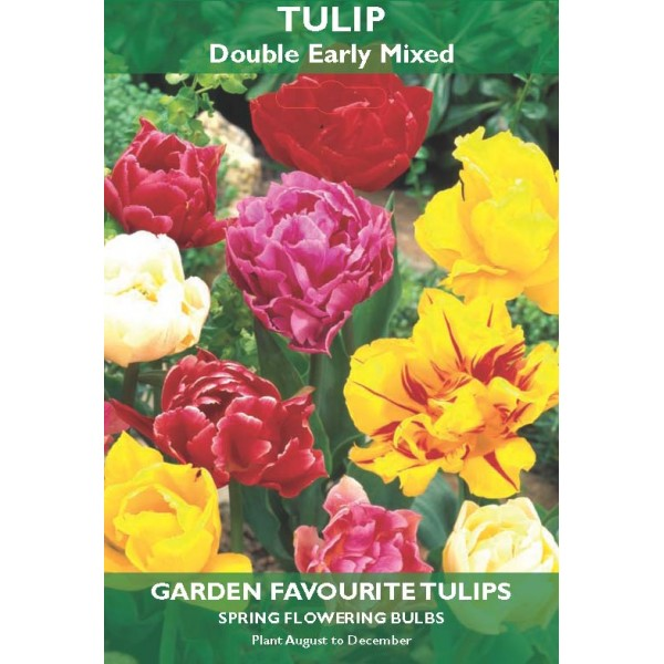 Tulip Double Early Mixed - 5 Bulbs per pack