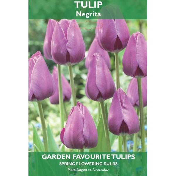 Tulip Triumph Negrita - 5 Bulbs per pack