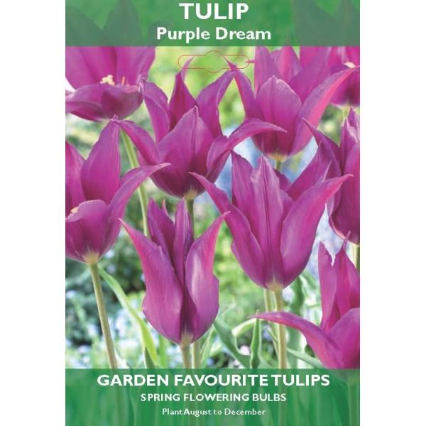 Tulip Purple Dream (Lily Flowering) - 5 Bulbs per pack