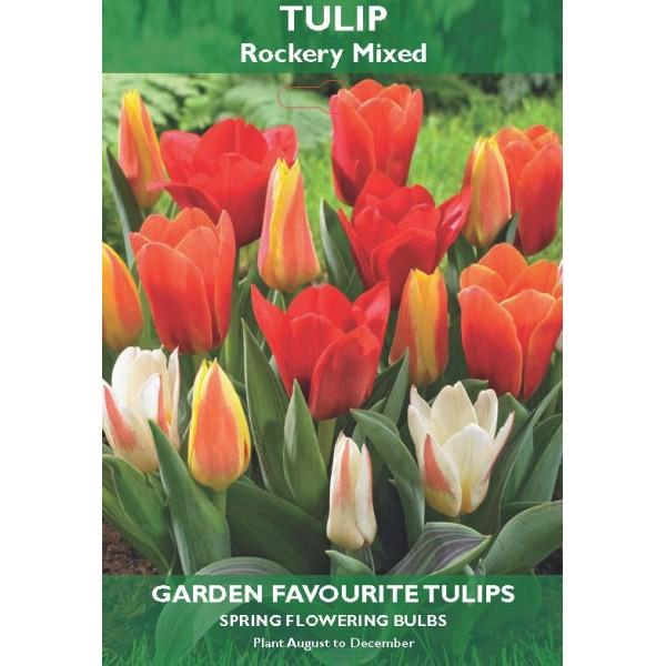 Tulip Rockery Mixed  (Kaufmanniana) - 6 Bulbs per pack