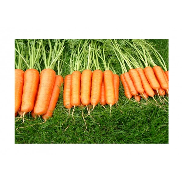Kings Carrot Sweet Candle F1