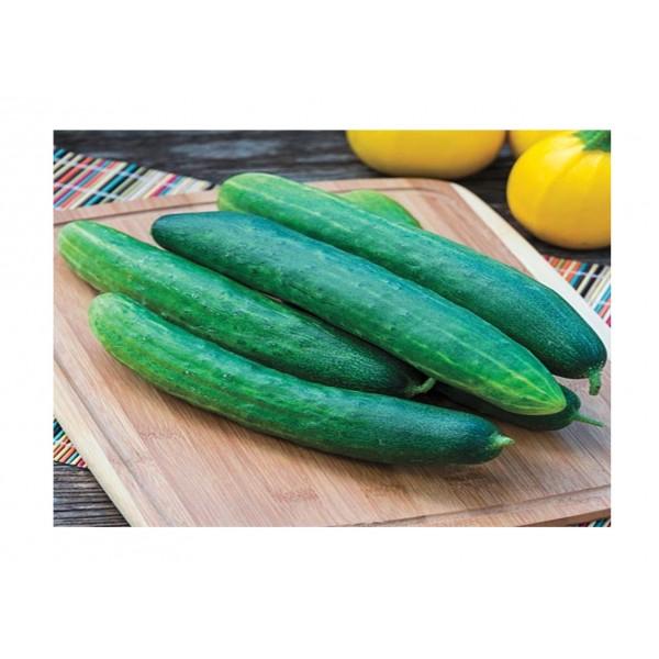 Kings Cucumber Burpless Tasty Green