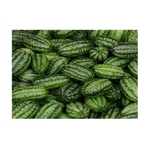 Kings Cucumber Cucamelon