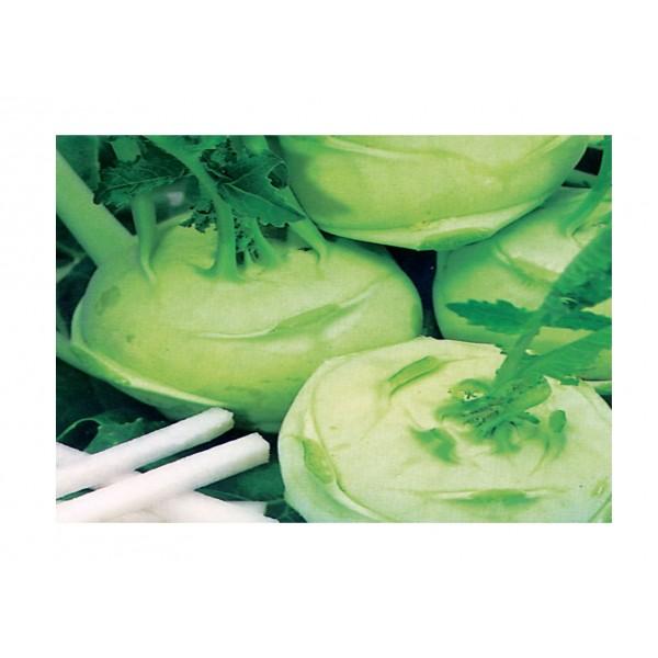Kings Kohl Rabi Green Delicacy