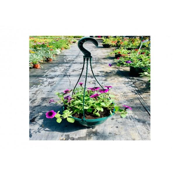 Petunia Plastic Hanging Basket
