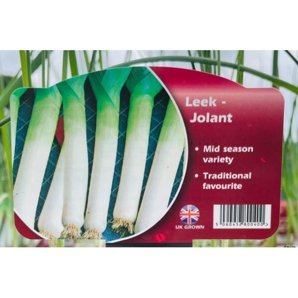 Leek - Jolant